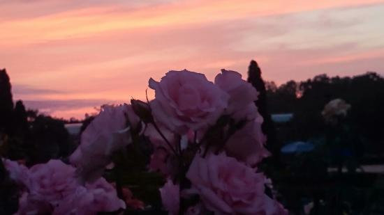 夕焼けと薔薇