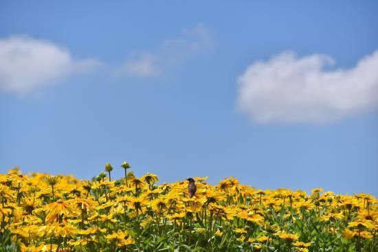 10万株の花が輝く『花の丘』より☆