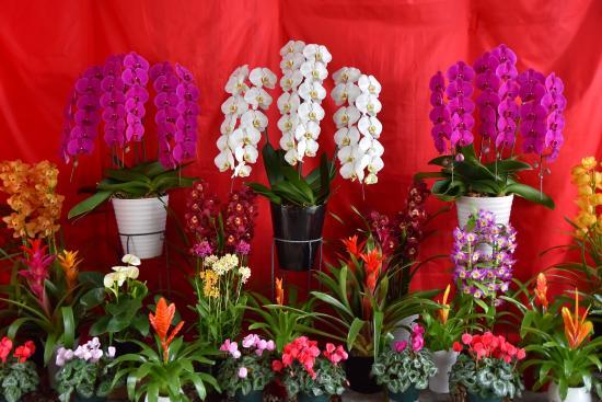 世界三大花木「カエンボク」開花☆鮮やかな…