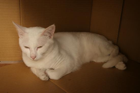 猫ノミ シャンプー